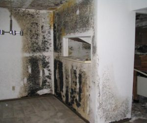 Extensive Toxic Mold Damage