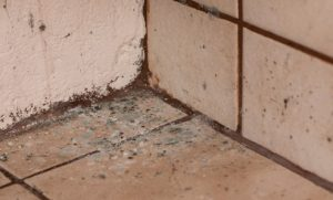 Four Ways To Prevent Mold Growth In Your House Sylvane