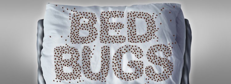 Remove Bed Bugs & Protect Your Mattress without Chemicals